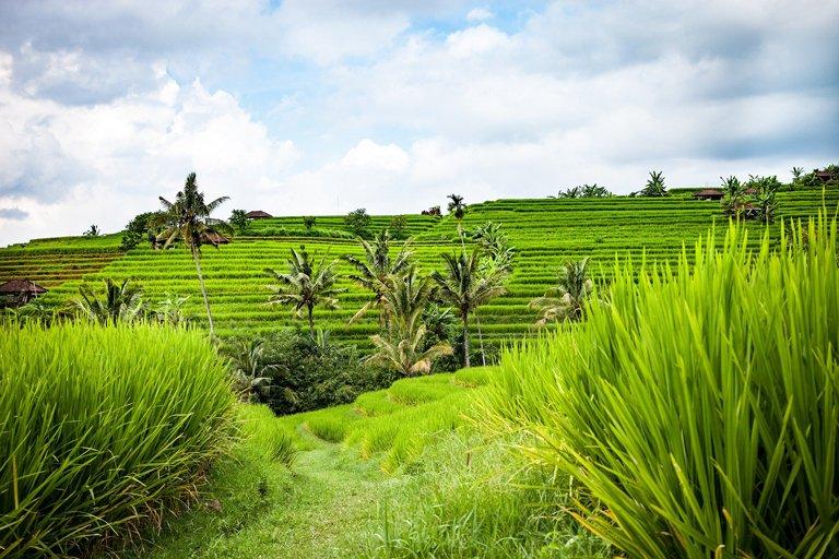 Las terrazas de arroz en Jatiluwih, Bali