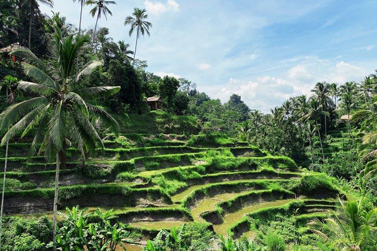 Vista a las terrazas de arroz en Tegallalang, Bali